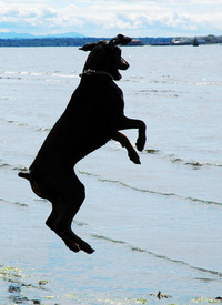 dog-leaping-for-joy-1496381